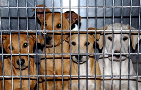 selling puppies laws california just became the state to require pet stores to sell only rescue animals