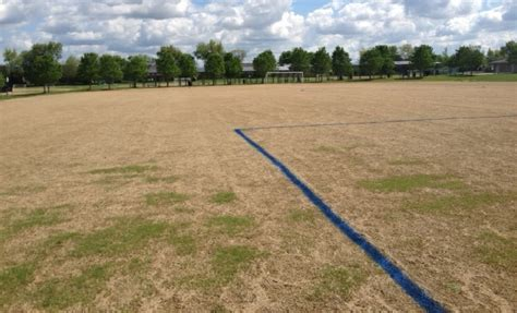 zoysia grass is great for small yards its environmentally friendly