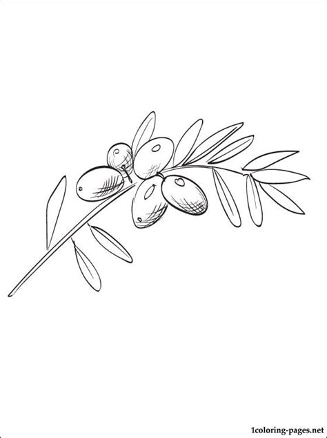 coloring page of olive tree olive coloring page for free coloring pages