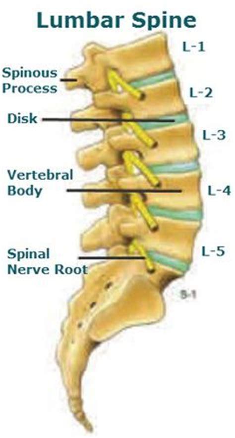 spinal discs diagram 1000 images about bones on thoracic vertebrae