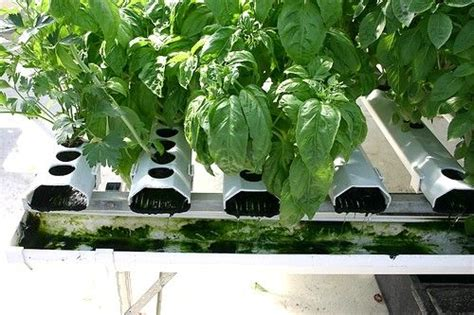 hydroponic container gardening container garden hydroponics plants
