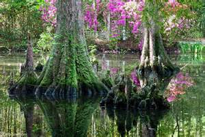 cypress gardens charleston sc usa beautiful nature