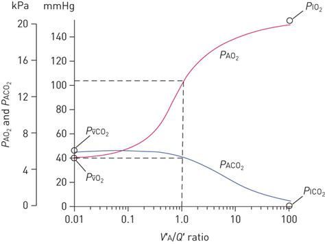 Oven Gas Lung gas exchange and ventilation perfusion relationships in