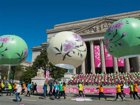 national cherry blossom festival national cherry blossom festival washington org