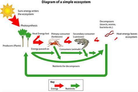 ecosystem diagram ecology raheel