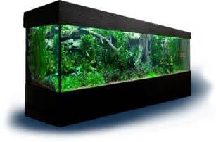 wie lange beleuchtung im aquarium das aquarium ratgeber rund um die aquaristik