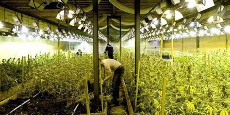 chambre des m騁iers du rh e le cannabis une culture en plein essor la libre be