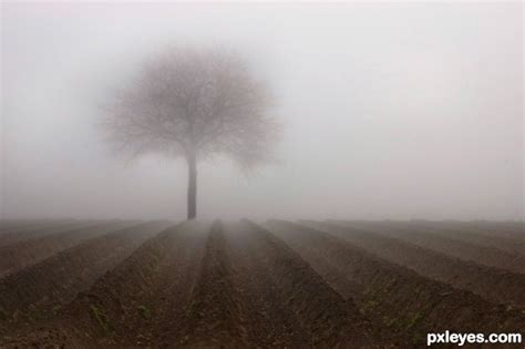 fog clipart free clip trees in fog cliparts