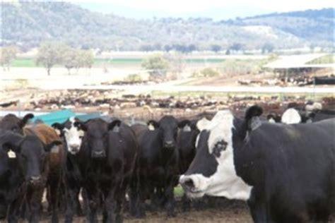 top 25: no 10 elders killara feedlot beef central