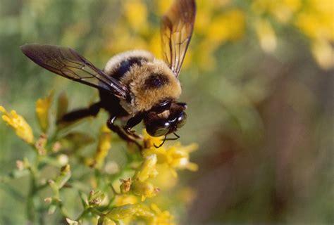 bee the biggest animals kingdom
