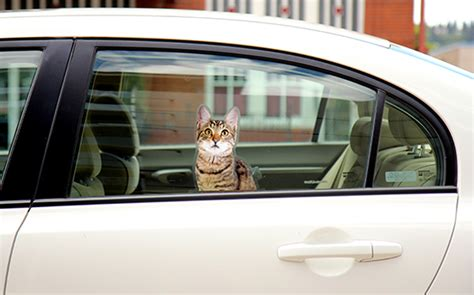 Cat Friendly Home Design passenger pets window clings add fun to any window