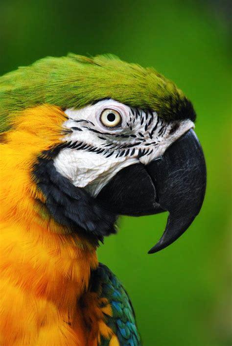 tattoo animal in trinidad blue and gold macaw cincinnati zoo trinidad animals