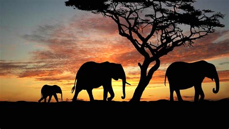 elephant wallpaper for mac breakfast around the world africa evoke healthy foods