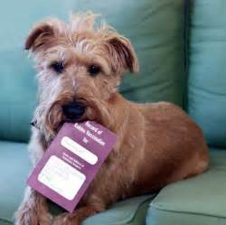 puppy passport pet owners wanting to take their animals abroad must apply for new animal passports as