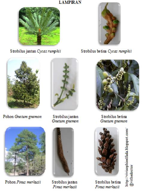 Biologi Edisi Kedelapan Jld 2 laporan praktikum botani phanerogamae pinophyta