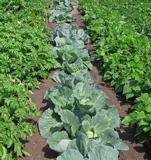 Frugal Gardening by Frugal Gardening Penniless Parenting