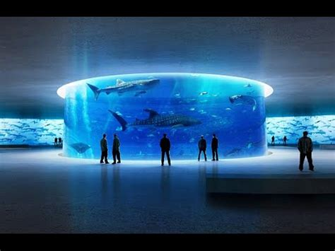 aquatrium: new york aquarium concept features marine life
