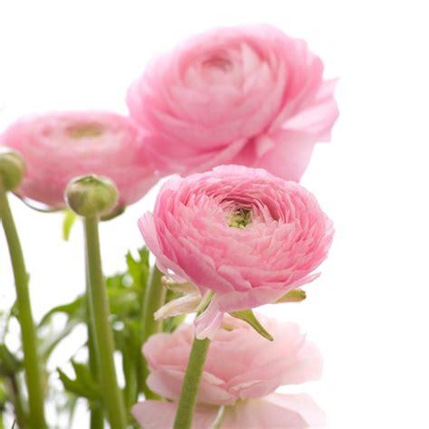 ranunculus bouquet ranunculus