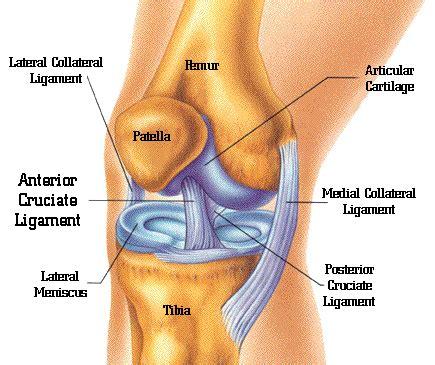 knee ligament injuries | richmond va | orthova
