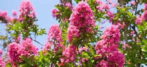 summer flowering trees flower power