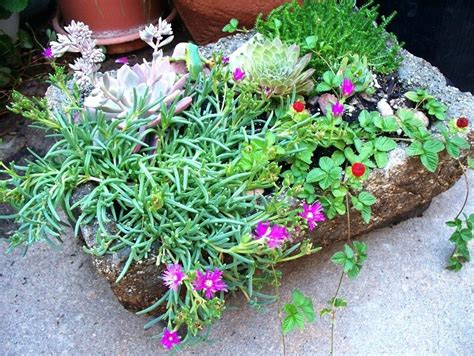 how to start a rock garden rock garden plants what are plants for rock gardens