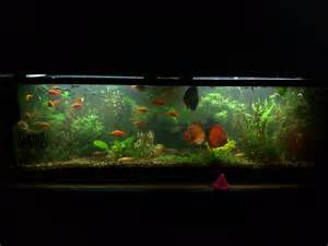 Freshwater Aquascape Ideas by Dreamy Aquascaping