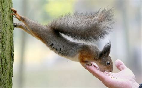 imagenes graciosas 4k squirrels rodents hands people humor funny feet paws