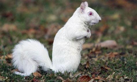 imagenes de animales albinos fotos de animales que por ser albinos no dejan de ser