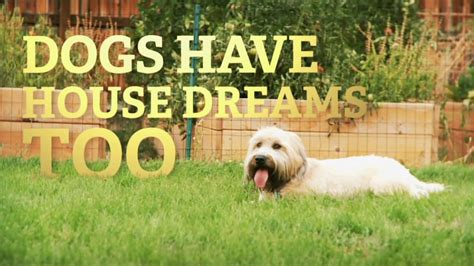 dog house commercial metro brokers commercial dog house dream youtube