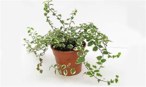 piante da bagno piante da appartamento perfette anche in bagno casafacile