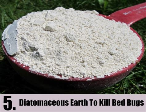 Does Diatomaceous Earth Kill Bed Bug Eggs 28 Images Does Diatomaceous Earth Kill