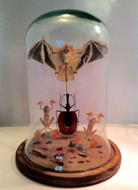 cabinet de curiosit 233 globe verre insectes chauve souris