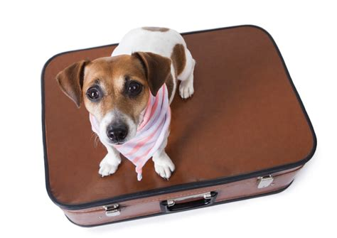 boarding a puppy pet boarding homes every time you need an d for delhi