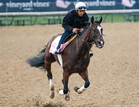 churchill at the gallop kentucky derby week 2017 photo gallery lady and the track