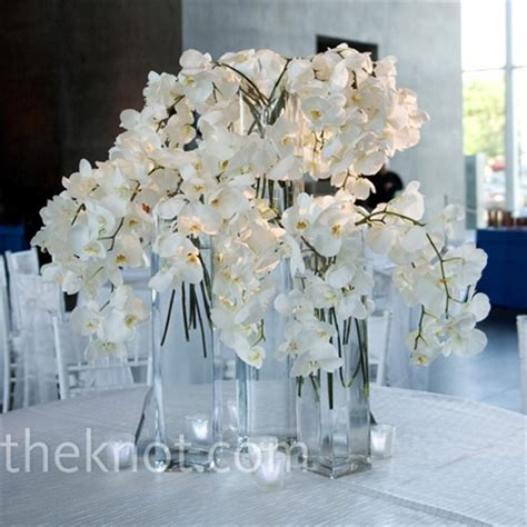 white orchid centerpieces 301 moved permanently