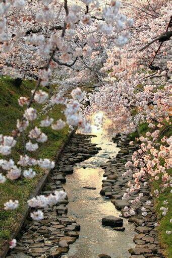 immagini fiori giapponesi oltre 25 fantastiche idee su fiori giapponesi su