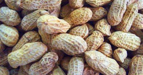 latar belakang membuat oncom hendra baik hati manfaat kacang kulit
