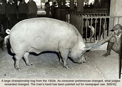 making bacon: death, mechanization, and the ecology of pig