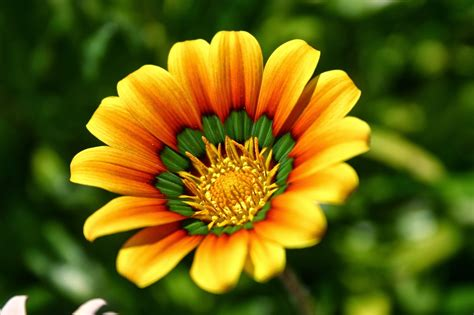 best flowers blok888 top 10 most beautiful flowers in the world 2