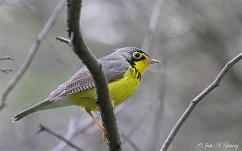 birding is fun migration magic in chicago
