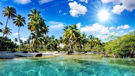 palmen für zuhause die 61 besten urlaub hintergrundbilder