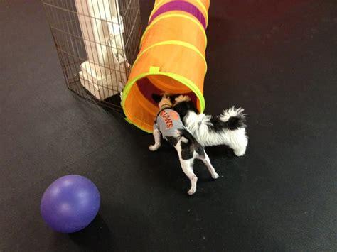 sf puppy prep sf puppy prep 66 foto e 264 recensioni addestramento di animali domestici 251