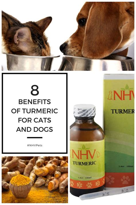 is turmeric for dogs 181 best herbs for pets images on herbs diabetes and grasses