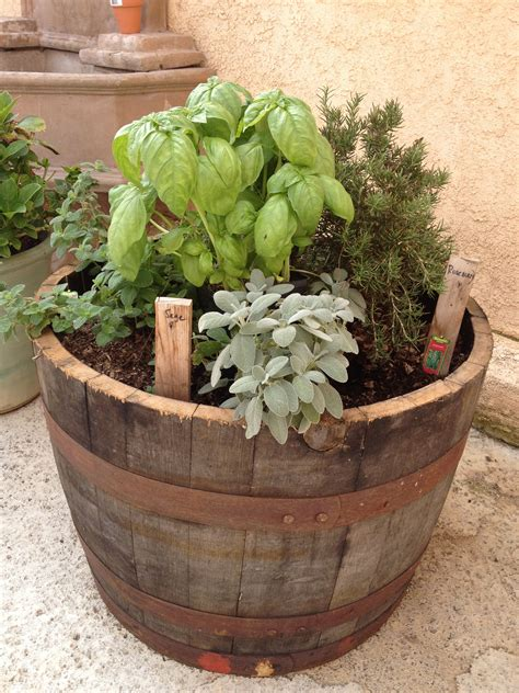 herb garden  wine barrel    barrel