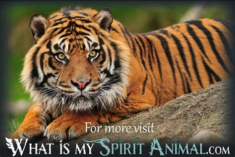 facts about the new year tiger tiger facts songs trivia mammal animal facts