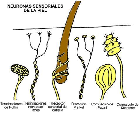 imagenes sensoriales tactiles ejemplos sum 233 rgete en el maravilloso mundo de nuestro sistema