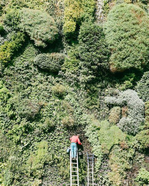 vertical gardens or living walls martha stewart