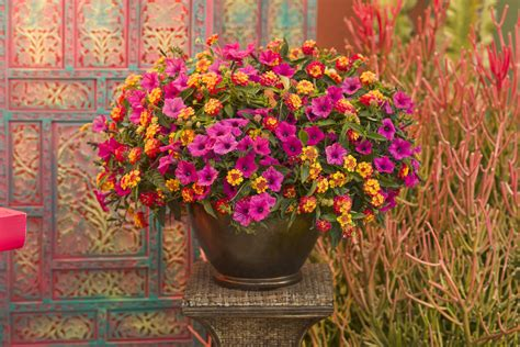 images of 6 flowers in pots bigger really is better tips on container gardening proven winners