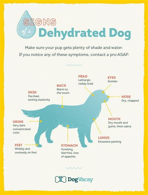 signs of dehydration in dogs 5 warning signs your is dehydrated some pets