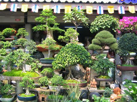 gambar tanaman hias bonsai  unik  cantik foto